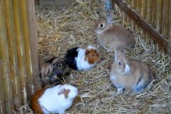 lapins et cochons d'indes